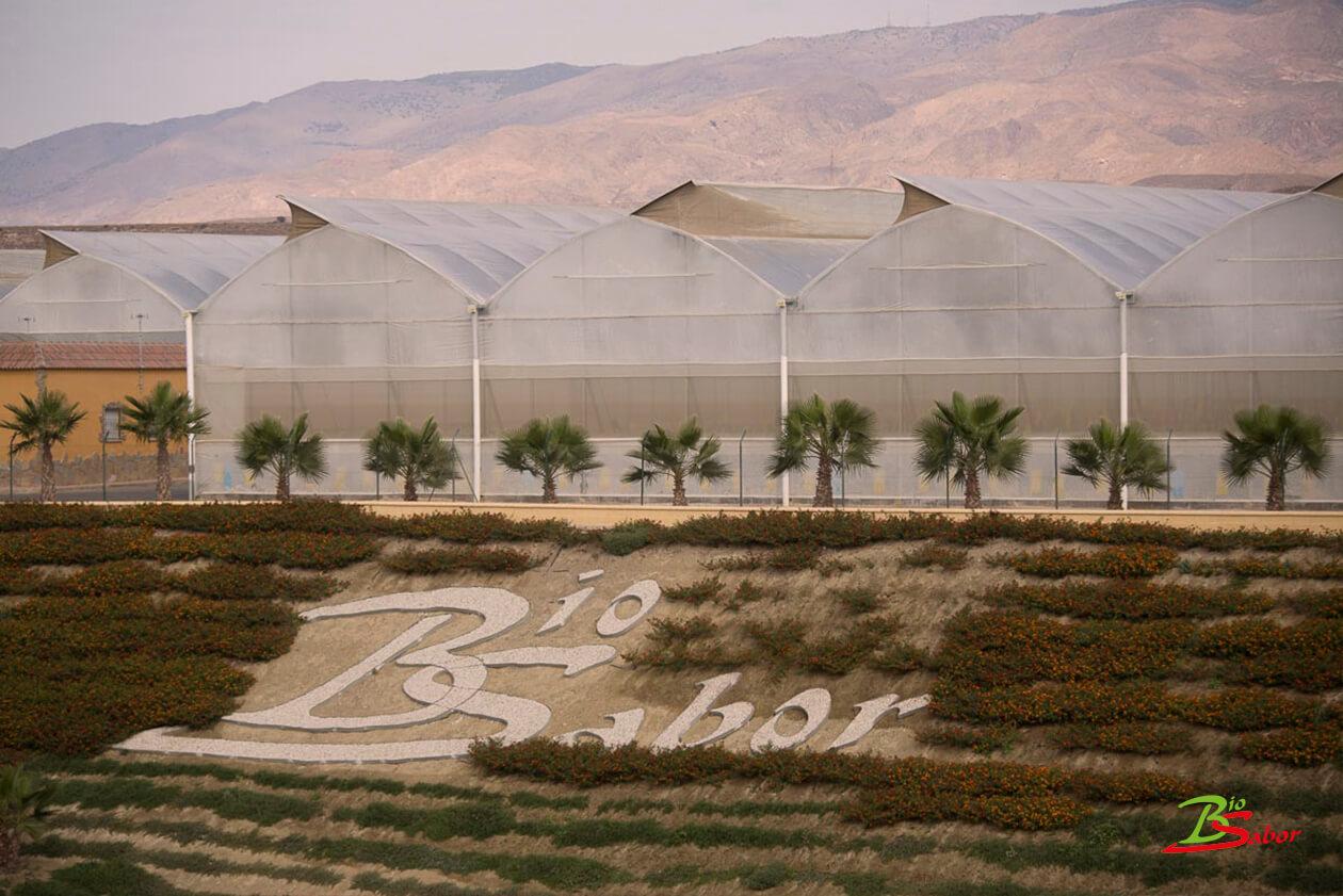 invernaderos-ecologicos-biosabor